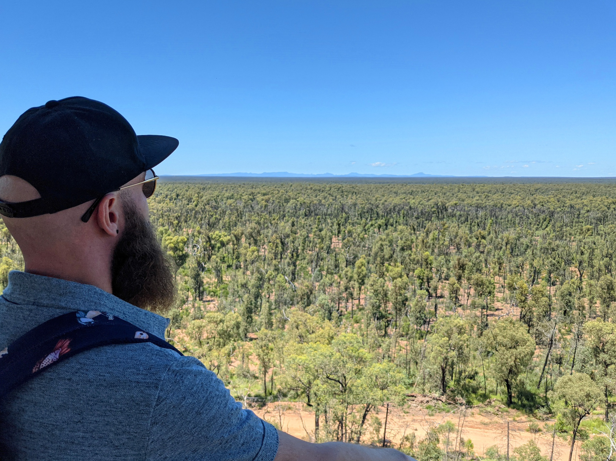 pilliga forests