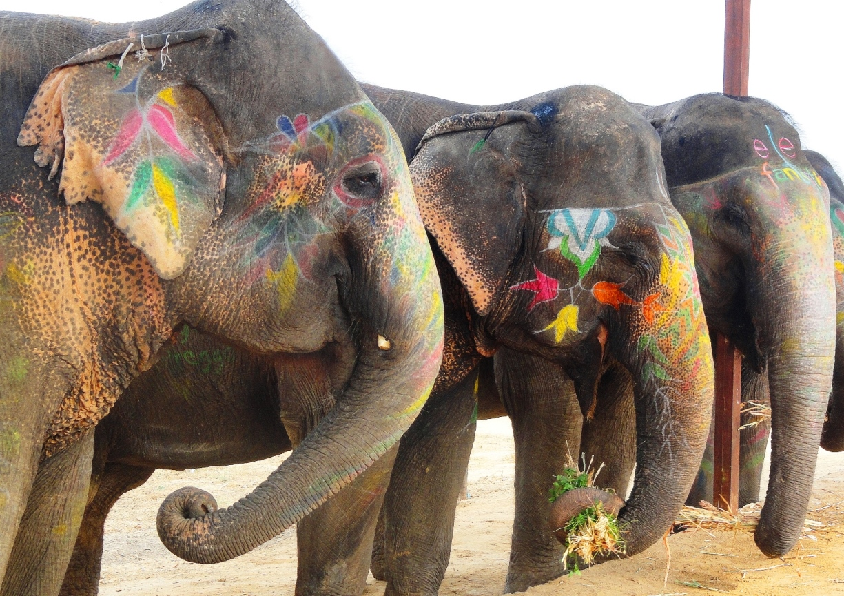 elephants at elephantastic jaipur